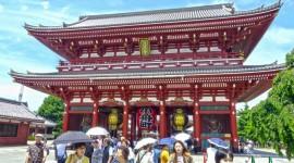 07)JAPON CEREZOS - SALIDA GRUPAL ACOMPAÑADA POR HAYDEE ANGELI 21 DE MARZO 2020  - 15 DIAS / 11 NOCHES